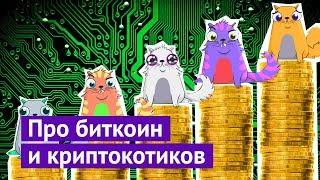 Криптокотики, биткоин и как я случайно заработал 5000$