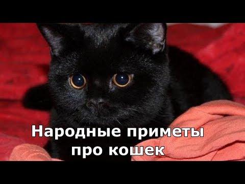 Народные приметы про кошек
