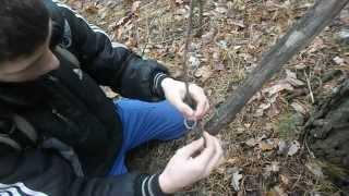Как поймать белку в лесу живой