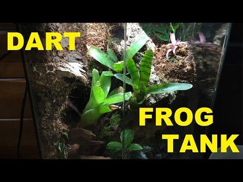 BUILDING A DART FROG TANK!!