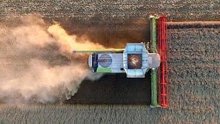 Harvest 2015 | Claas Lexion 780 Terra Trac | Koninklijke Maatschap De Wilhelminapolder | Tarwe Oogst