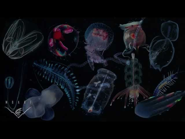 There's no such thing as a jellyfish