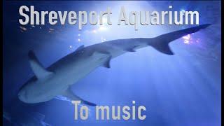 Shreveport Aquarium | Shreveport, Louisiana | Sharks | Sting Rays