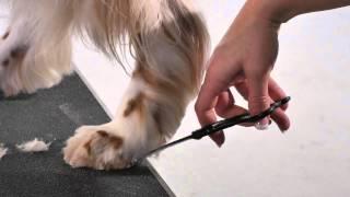 Andis Professional Animal Grooming Shears