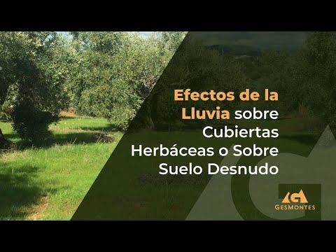 Efectos de la Lluvia sobre cubiertas herbáceas o sobre suelo desnudo