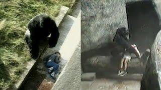 Kids Have Fallen Into Gorilla