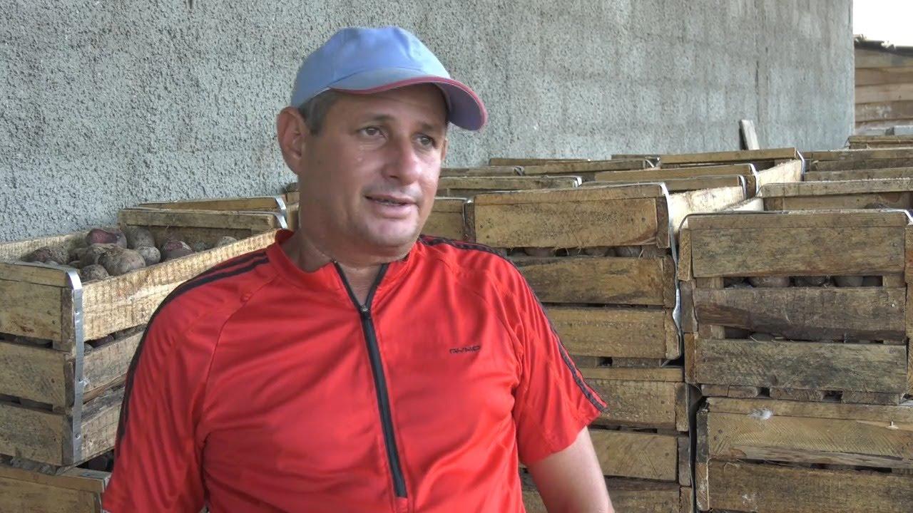Incrementa campesino Granmense cultivos para la exportación