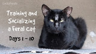 Training And Socializing A Feral Cat - Days 1 - 10 - Compilation Boo Day Videos