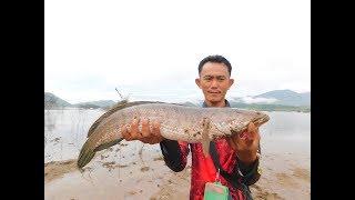 ปลาช่อนยักษ์ใหญ่...ใหญ่จริงๆ #DUCKLING_FROG