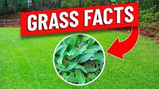 Bermuda, Zoysia, St Augustine and Centipede Warm Season Grasses