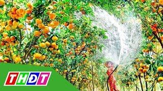 Đồng Tháp thúc đẩy phát triển Du lịch nông nghiệp | THDT