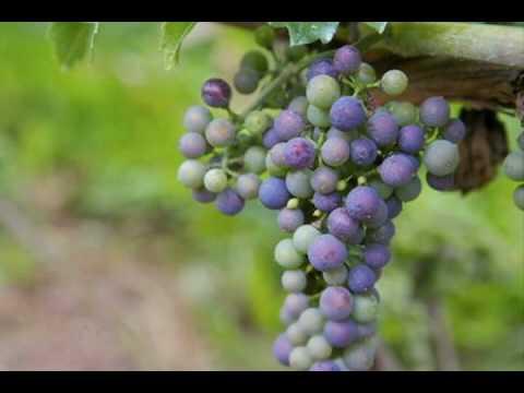 Fruit of the Spirit Song Video for Children Ministry