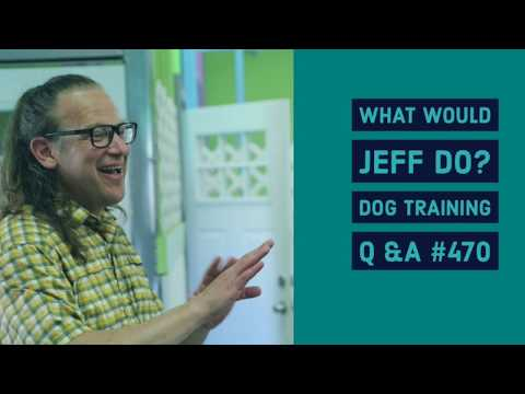 Dog Reactive Dogs | Structured Dog Walks | What Would Jeff Do? Dog Training Q & A #470