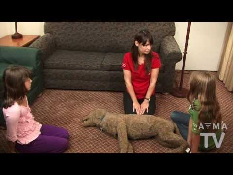 AVMA TV: CPR for Pets - YouTube