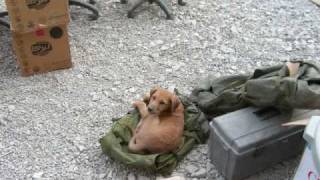 Saving Cinnamon - Afghanistan puppy rescue - True Story