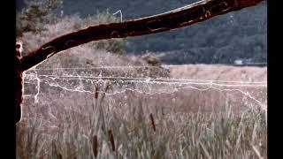Bibio   Ribbons (Album Trailer Part 5)