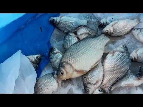 Карась.Подледный лов. Озеро Большой Камаган Курганская область 25.11.2018
