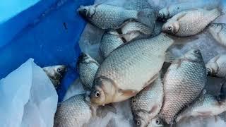 Озеро чистое курганская область рыбалка