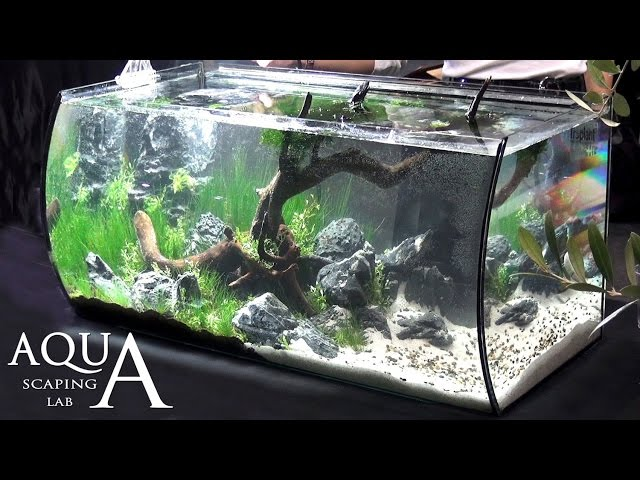 Aquascaping Lab - Tutorial Realistic Natural setting tank tree forest (size 80 x 40 x 40h 130 L)