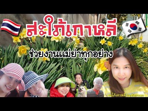 สะใภ้เกาหลีทำงานทุกอย่างช่วยเเม่ย่า/ชีวิตสาวไทยในบ้านสามีต่างประเทศ/ประเทศเกาหลีใต้/เเม่บ้านเกาหลี