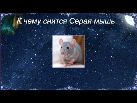 К чему снится Серая мышь (Сонник)