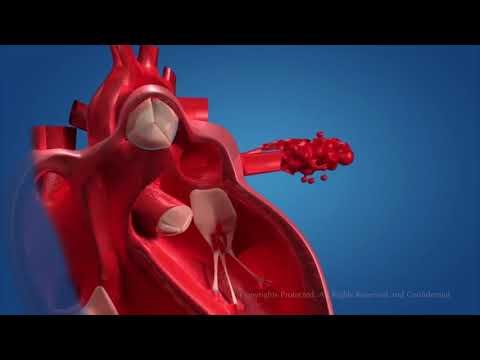 Сердце во всей красе! 3D  анимация работы сердца, со всеми механизмами работы, и кровообращения