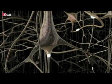 Schejnyj die Osteochondrose das Medikament für die Behandlung die Behandlung