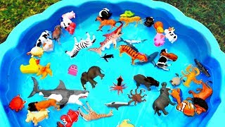 Learn Colors With Animals Pool Show for Children - Colours With Elephant and Cow for Kids