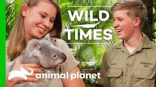 Meet Dexter The Cuddly Koala! | Wild Times