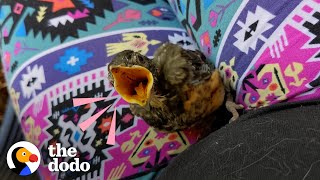 """Tiny Baby Robin Learns To Fly With A Little""""Boost"""""""