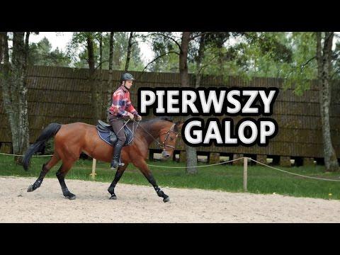 Kupić patogenu koni Jekaterynburg