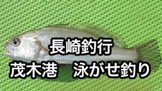 長崎釣行茂木港泳がせ釣り