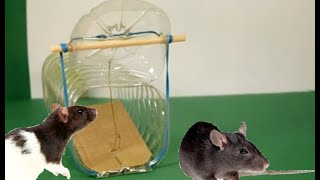 BEST HOMEMADE RAT TRAP | YOU WILL BE SURPRISED