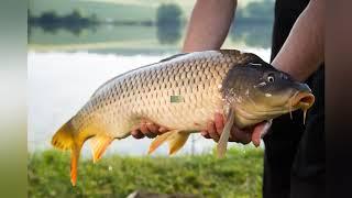 Летняя рыбалка на поплавочную удочку