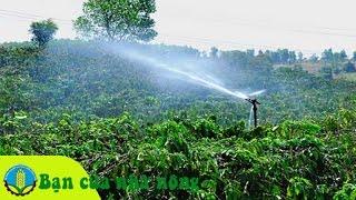 Kỹ thuật, kinh nghiệm tưới nước cho cây trồng vào mùa khô