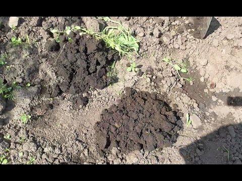"""Что такое """"Структура почвы"""", и можно ли ее улучшить?"""
