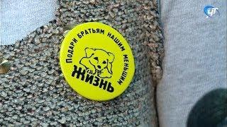 Новгородские зоозащитники проводят открытые уроки гуманного отношения к животным