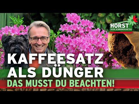 Nevyhazujte kávovou sedlinu! Je dobrá pro rostliny.