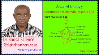 Locomotion in animals lesson 2 of 2