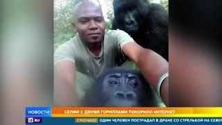 Селфи с двумя гориллами покорило Интернет