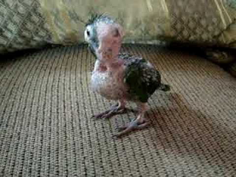 Pájaros Caídos - Ayudandolos a vivir: Qué comen los