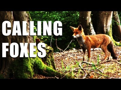 Fieldsports Britain : Shooting foxes, rabbits and how Italians run estates  (episode 148)
