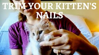 Trimming tiny kitten nails! | How to cut claws on a young kitten