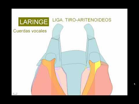 LFK con osteofitos de la columna cervical