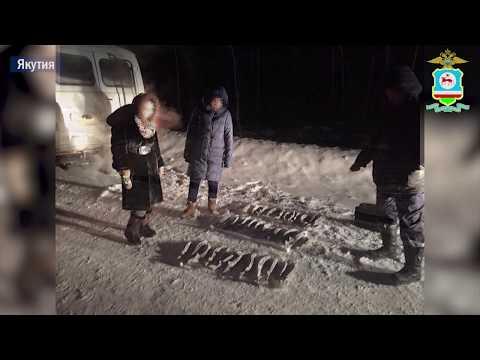 В Якутии браконьер выловил осетров на сумму более 5 миллионов рублей