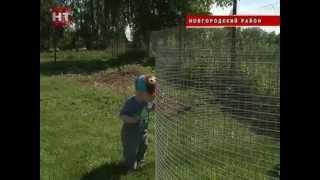 Владелец личного подсобного хозяйства из Новгородского района открыл у себя на участке настоящий птичий парк