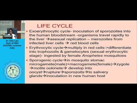 Parazita 4 sorozat