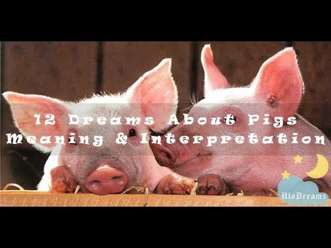 #24 Dreams About Pigs – Meaning & Interpretation