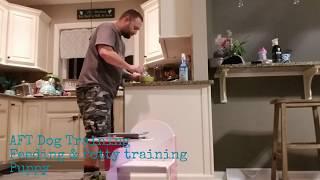Feeding & Potty training 6 week old puppy
