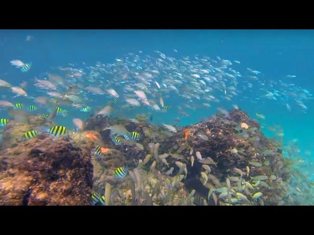 Turtle Reef | Deerfield Beach | Boca Raton | Snorkeling